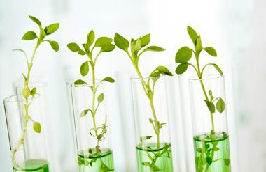 Ciencia avanzada cosmetica natural